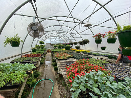Students Sell Plants in Greenhouse