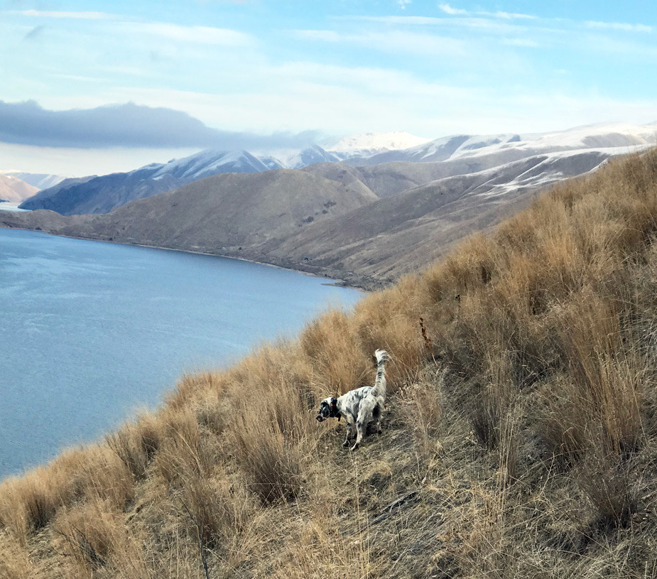 Chukar hunting in Idaho.