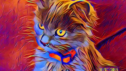cat-DESKTOP-3BNFI0Q.jpg