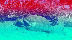 turtle.jpg.jpeg