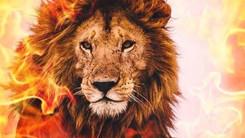 fiery lion.jpg