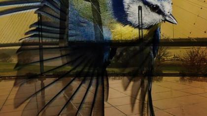 birdandbridge.jpg
