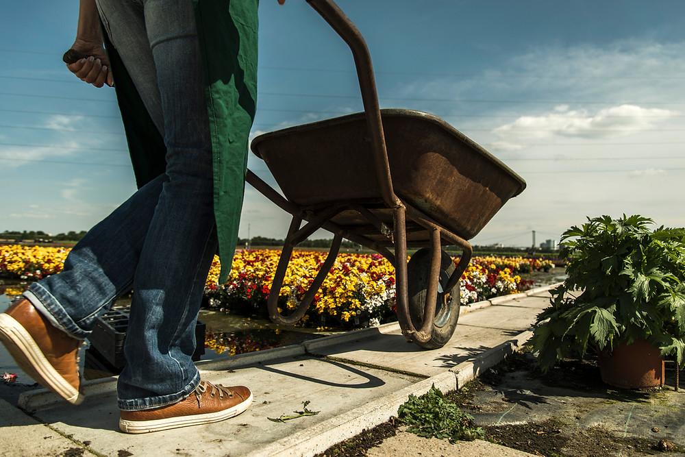 Omavaraistaloudessa kasvimaa lannoitetaan kompostin tuotteilla.
