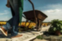 Озеленение, обрезка москва и московская область, садовник москва, сад, мощение, уборка участка, выведение сорняков
