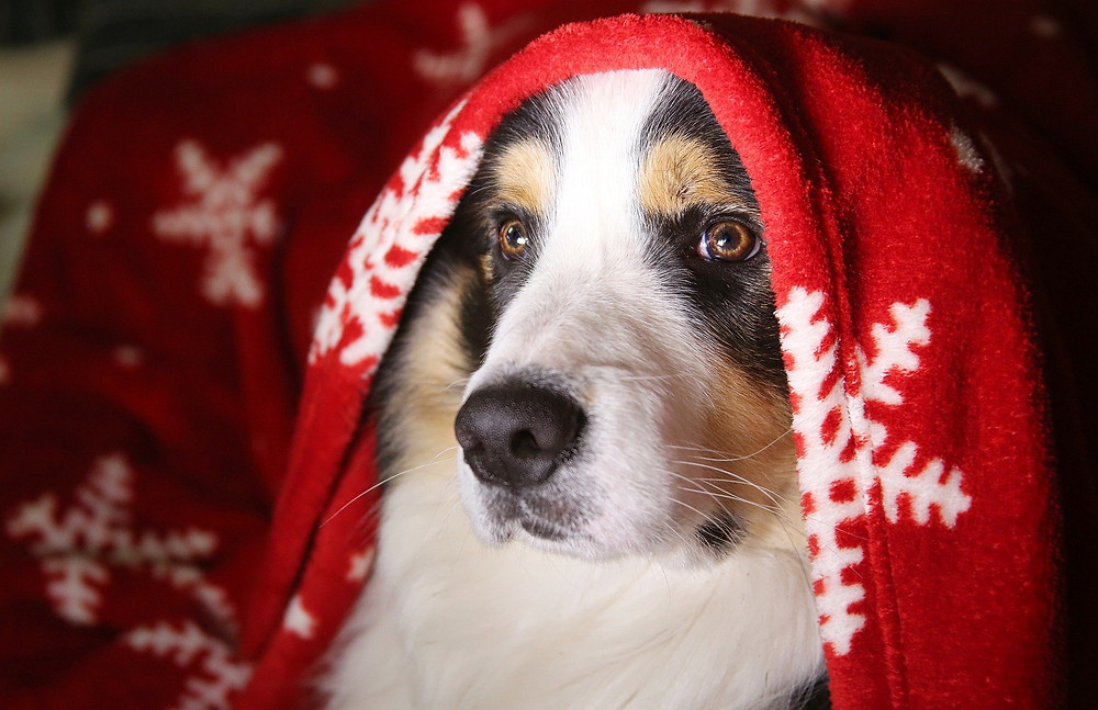 chien noël couverture