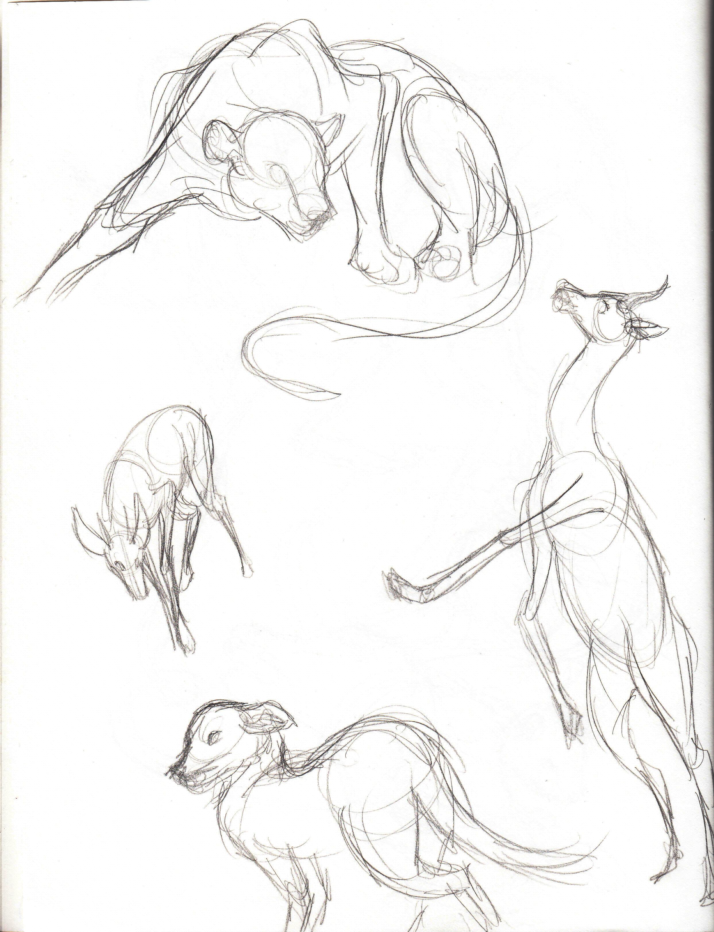 Field Animals_8