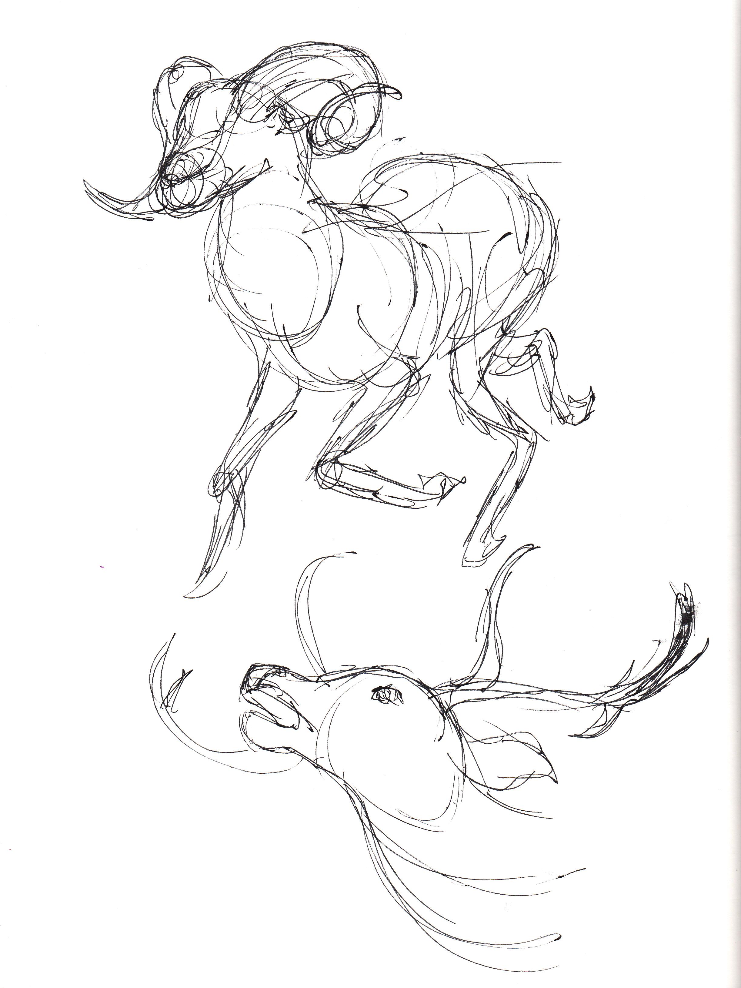 Field Animals_4