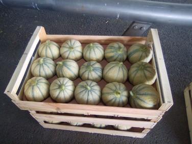 Au tour des melons...