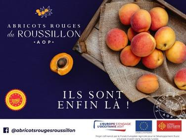 C'est la saison !  : Retrouvez les abricots rouges du Roussillon au Marche de Gros !