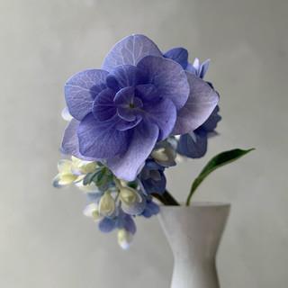 Hortensieblau.jpeg
