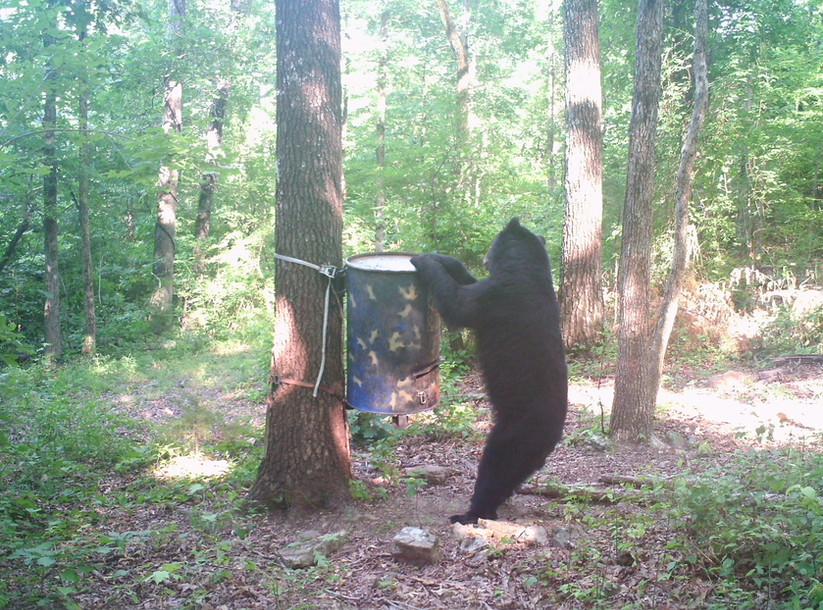 Bear Scene 3.JPG