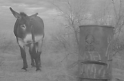 OAD feeder and donkey