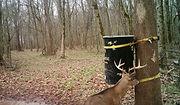OAD feeder strap on a tree buck approachin