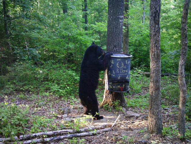 Bear Scene 2.JPG