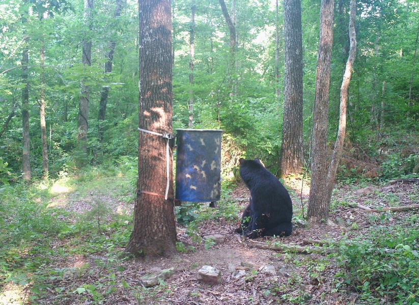 Bear Scene 4.JPG