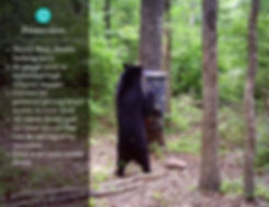 Bear proof automatic directional feeder from Texas