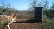 One and Done feeder with coyote