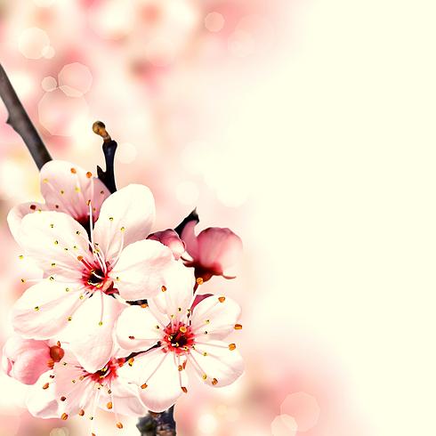voorjaarsbloem.png