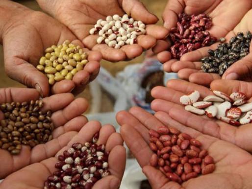 Preservación de las semillas autóctonas de México