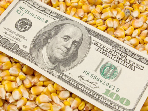 Aumentó 14% la importación de granos en el primer semestre
