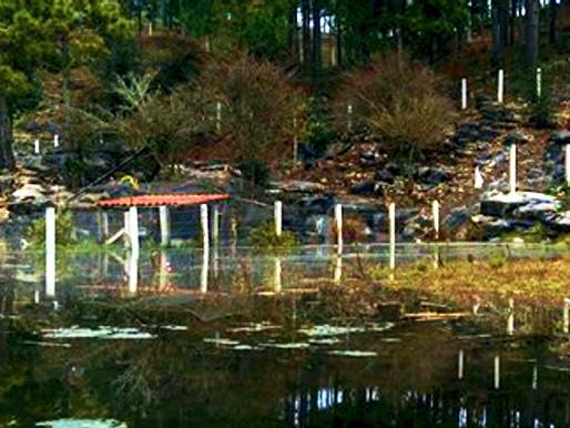 Planes hídricos de Fox, FCH y Peña se limitaron a tubos y presas: no acabaron inundaciones