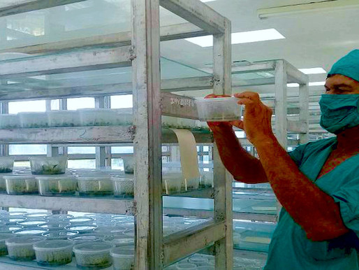 Semillas biotecnológicas «de casa» para revitalizar y multiplicar cultivos