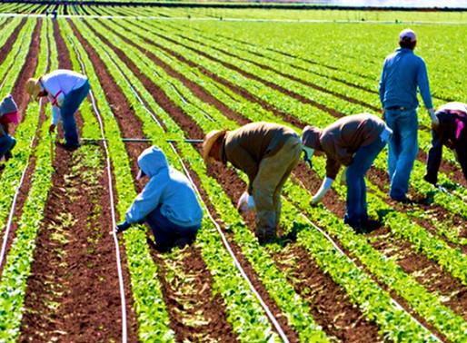 Canadá: Trabajadores agrícolas migrantes de Ontario, afectados por COVID-19