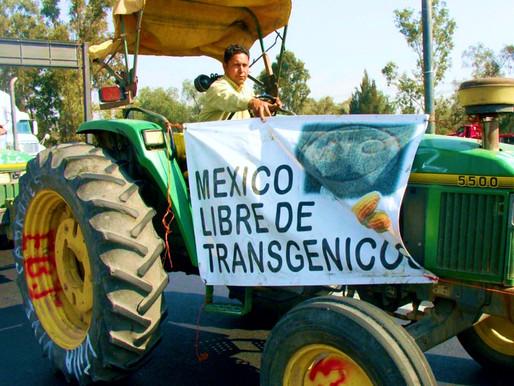 México, glifosato y Bayer-Monsanto