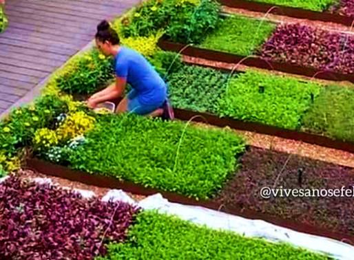 Hagamos agricultura urbana en tiempos de Covid-19