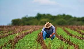 México puede producir sus propios insumos agrícolas