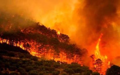 El incalculable daño de los incendios forestales