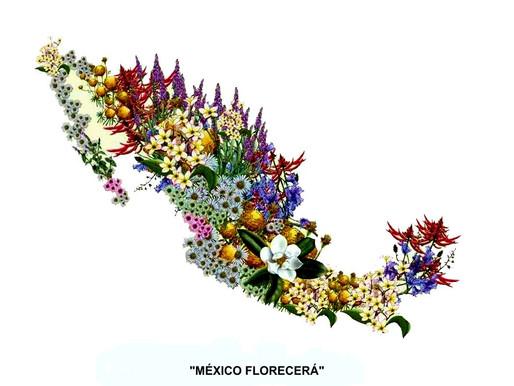 MÉXICO HOY Y AYER