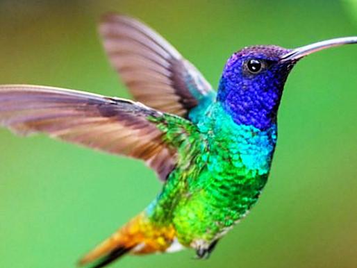 En este año hay 5 grandes verdades de Cuba que caben en el ala de un colibrí