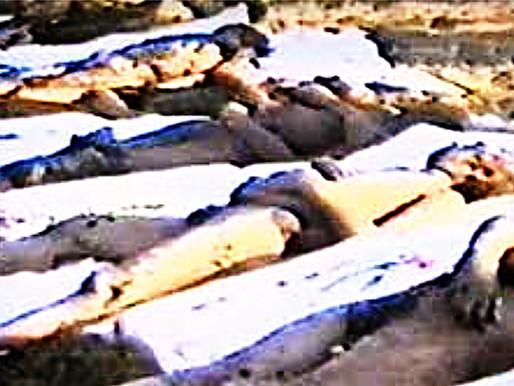 RUMANÍA. La falsa matanza de Timisoara y otros cuentos de terror que cuentan los reporteros