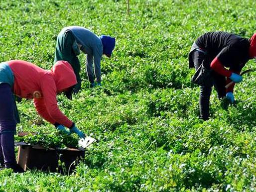 Ya no hay pretexto. Salarios mínimos para las personas jornaleras agrícolas