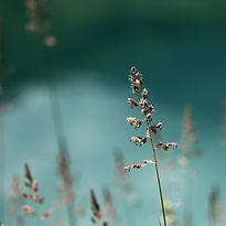 bloom-834364.jpg