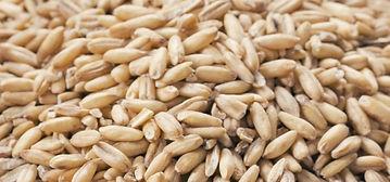 depositphotos_74904829-stock-photo-oat-flakes-seeds-and-bran_edited.jpg