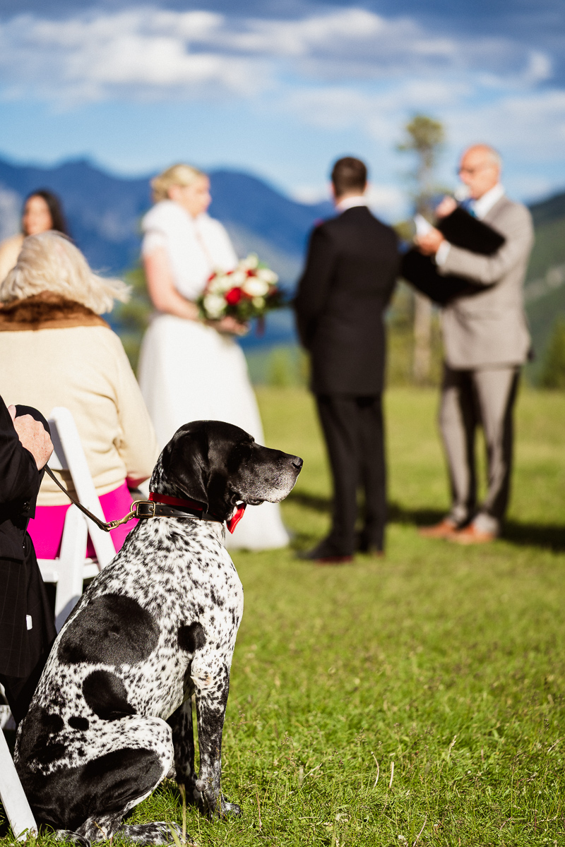 Dog watching over Tunnel Mountain wedding in Banff