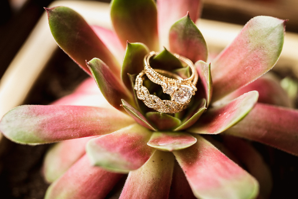 Ring shot with two rings held up by succulent plant