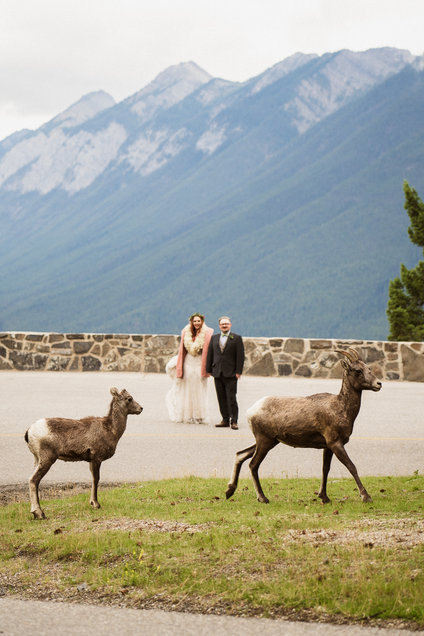 Wildlife at Banff wedding near Mount Norquay