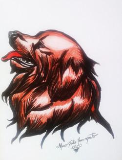 Canis Familiares