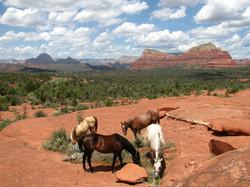 IMG_7065 4 HORSES