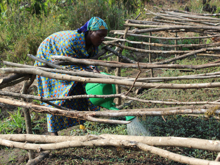 Women for Forests Democratic Republic of Congo – Winter 2017 Update