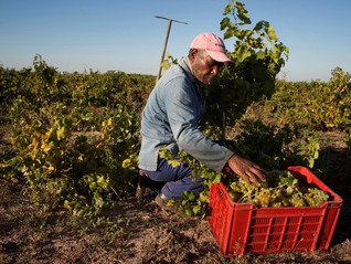What are the strengths of the South-African wine industry?