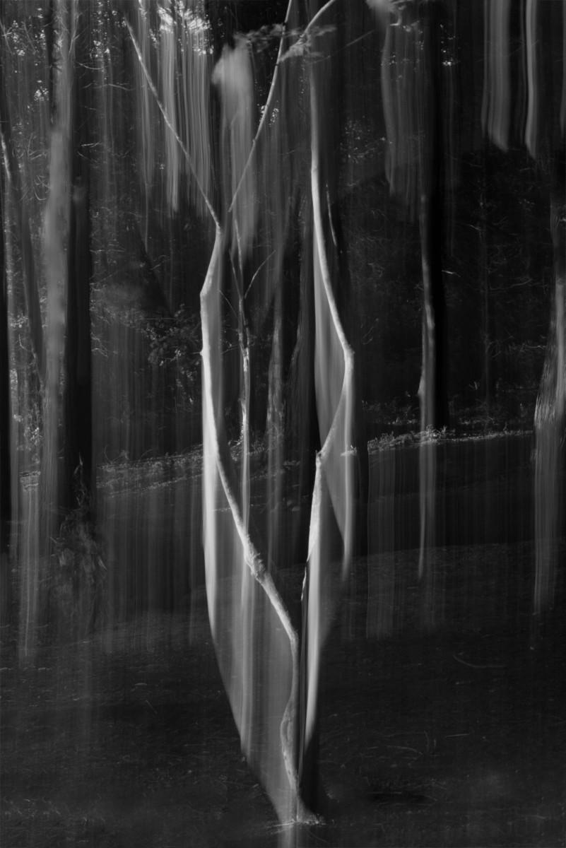 'Ghost Tree' by Julian Maitland (9 marks)