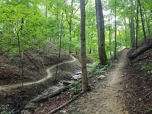 Trail C Ravines.jpg