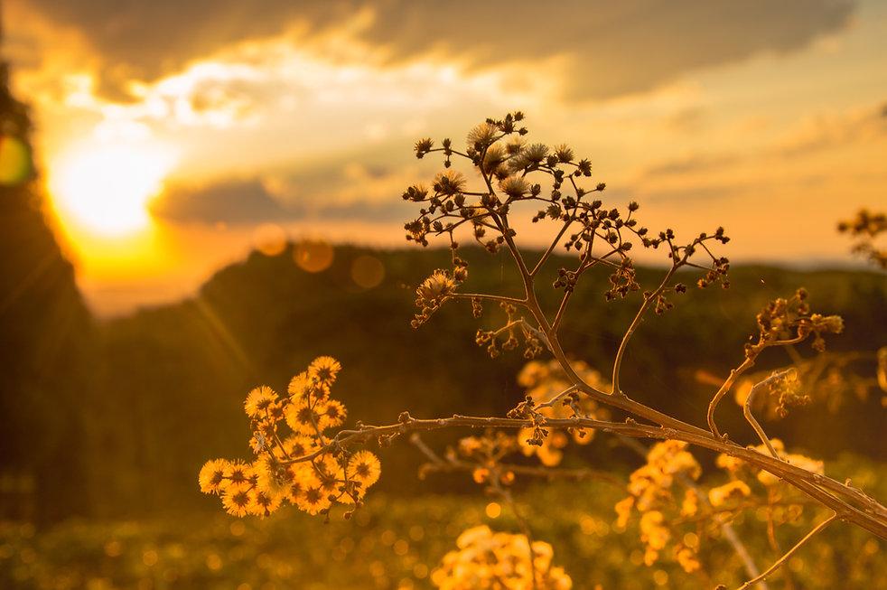 landscape-tree-nature-branch-blossom-lig