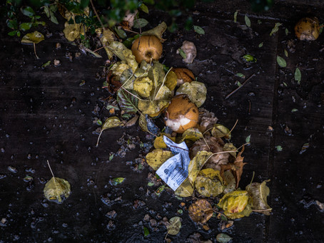 Why Everyone Needs To Be Composting