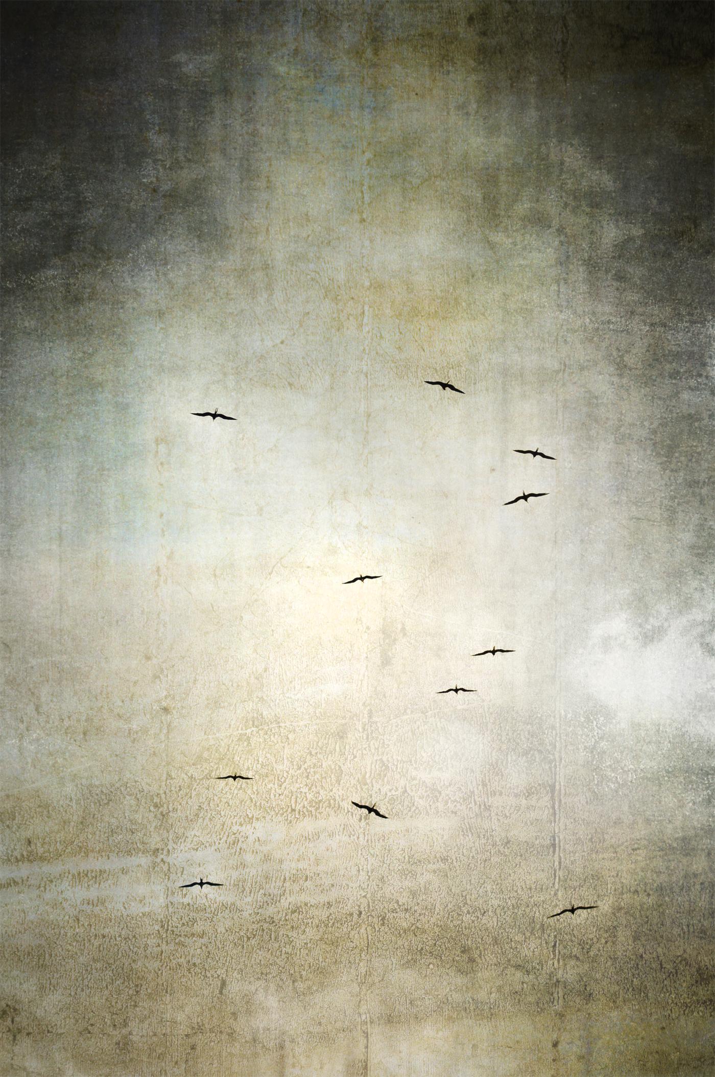 Falling Birds 495