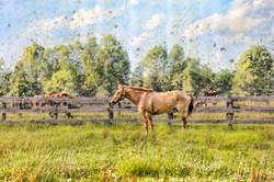 Middleburg Horses 5171 dotsg
